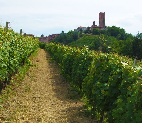 Barbaresco, a unique terroir