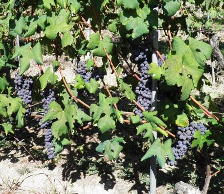 De Forville, il vino come specchio del territorio